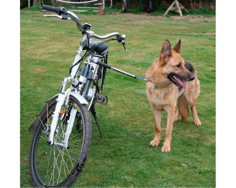 Велоспрингер и собака