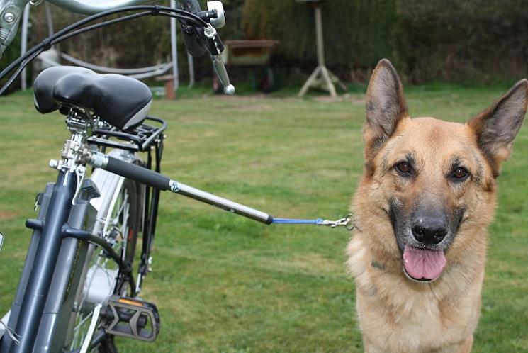 Как крепить собаку к велосипеду для прогулок
