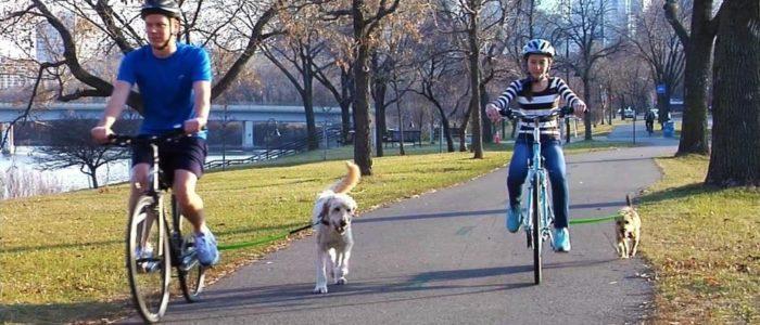 безопастная прогулка с собакой на велосипеде