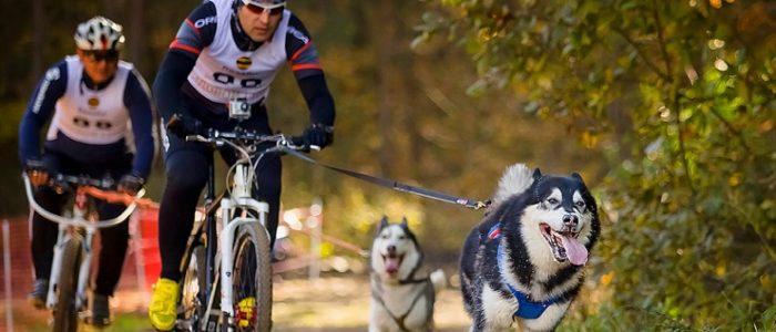 Поводок и крепление для собаки