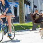 велоспрингер прогулка с собакой