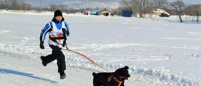 пояс и поводок для прогулок с собакой