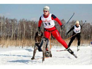 Потяг для собаки и лыжника