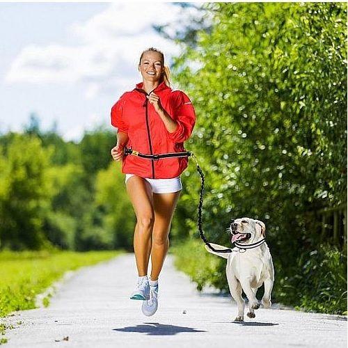 Снаряжение для бега с собакой