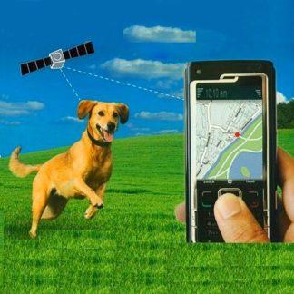 Ошейник с GPS для животных.