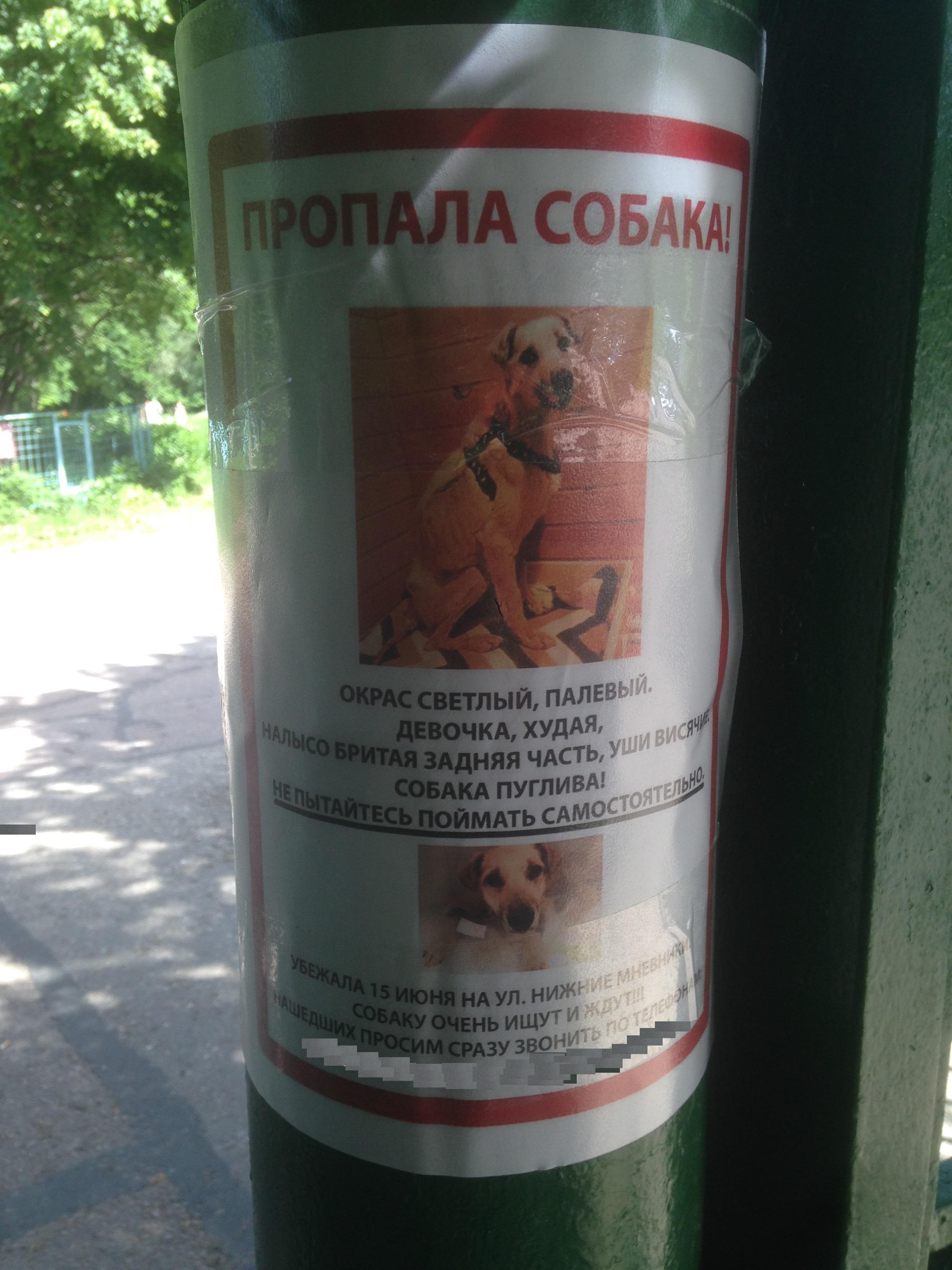 Пропала собака gps трекер