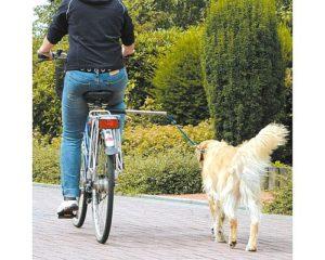 Прогулка с собакой на велоповодке