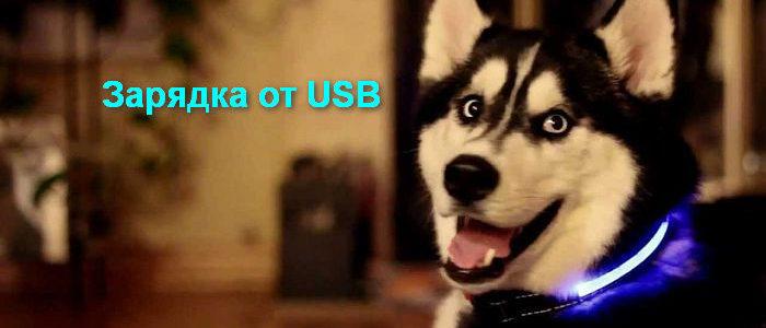 Светящийся ошейник, зарядка от USB