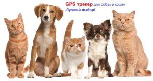 GPS трекер для собак и кошек лучшый выбор и цена
