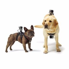 Шлейка для собак с креплением камеры Go-Pro