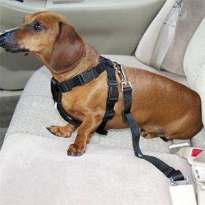 Поводок безопасности для собак в машине крепление