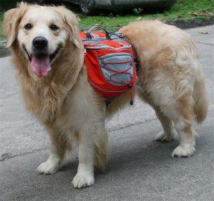 Рюкзак на спину собаке для походов фото оранжевый
