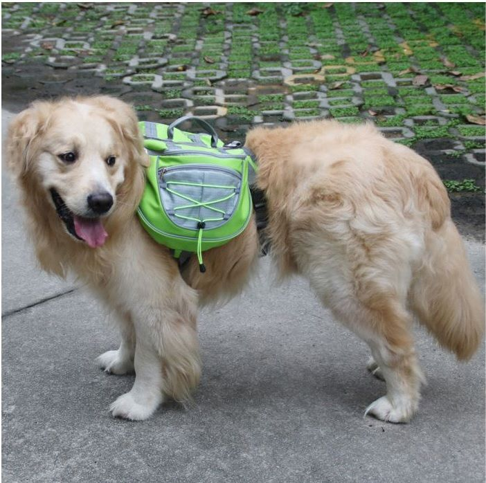 Рюкзак на спину собаке для походов фото зеленый
