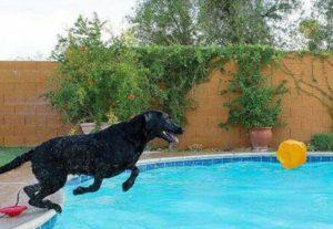 Эластичный плавающий мячик для собак