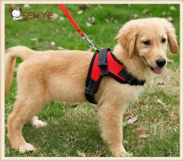 Шлейка для собак красная фото