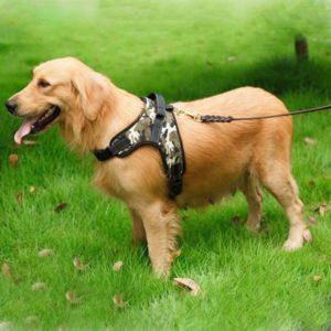 Шлейка для собак хаки фото