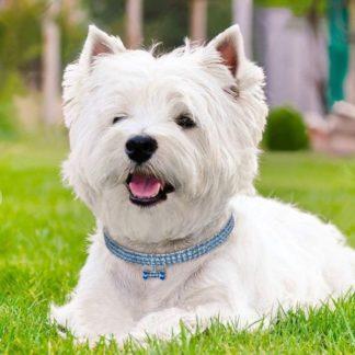 Украшения для собак
