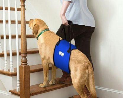 Шлейка поддерживающая для пожилых или больных собак