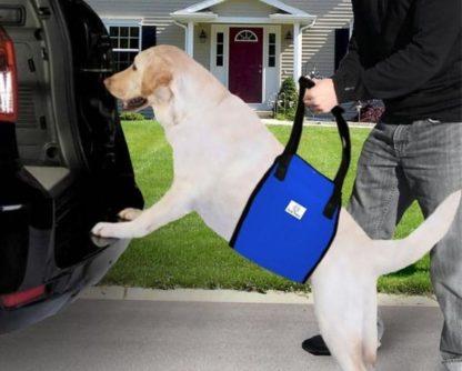 Шлейка поддерживающая для больных собак