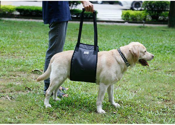 Шлейка для больных или пожилых собак