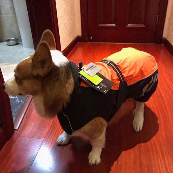 Водонепроницаемый жилет для собак светоотражающий фото