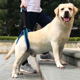 Ходунки поддержка задних лап для собак помощь на лестнице