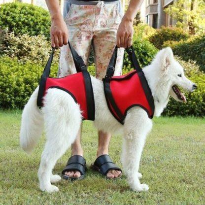Шлейка для пожилых, травмированных собак полная поддержка
