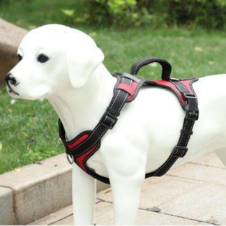 Шлейка для собак V образная, красная