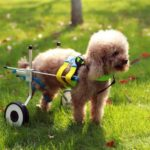 Инвалидная коляска для собак
