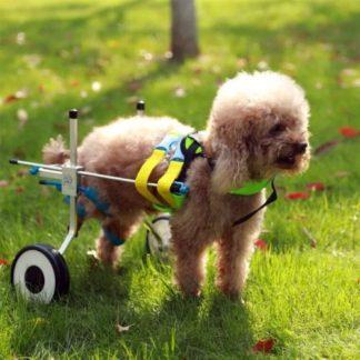Инвалидные коляски для собак