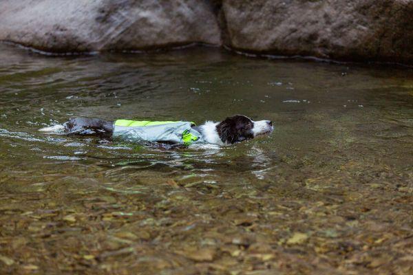 спасательный жилет для собак плавание