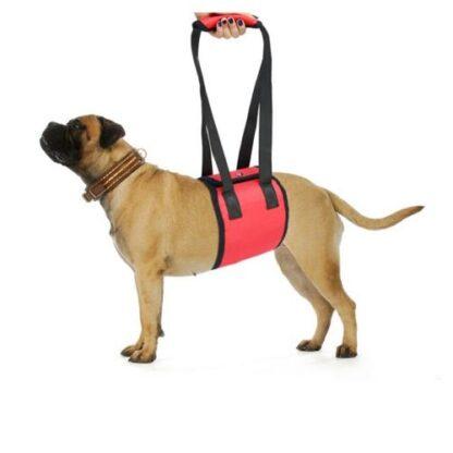 Бандаж под живот для пожилых и травмированных собак