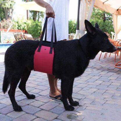 Бандаж под живот для пожилых собак