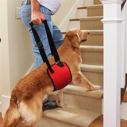 Шлейка для пожилых травмированных собак