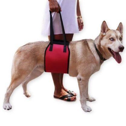 Бандаж под живот для травмированных собак